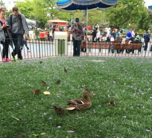 ducklings at Disneyland