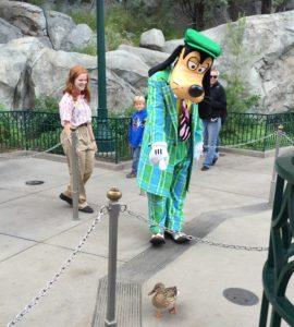Goofy sees a duck